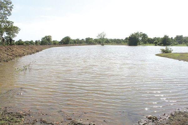 Rain Water Catchment / Irrigation Design